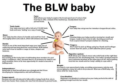 The Journey Of Parenthood Baby Led Weaning Update