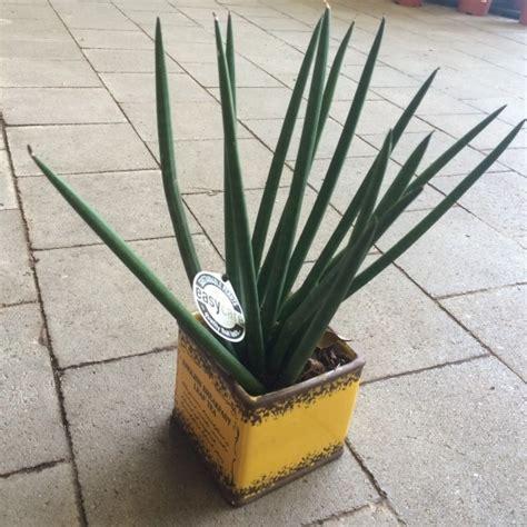 plante interieur mi ombre ces plantes d int 233 rieur robustes que vous pouvez offrir 224