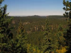 Forest Black Hills South Dakota