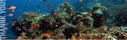 Coral Thank Staying Reef
