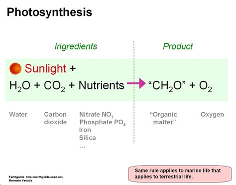photosynthesis involving glutexcel produce oxygen