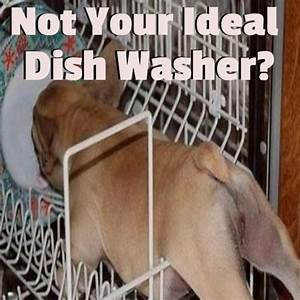 Warning Signs Your Dishwasher Needs Repair