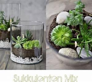 Pflanzen Terrarium Einrichten : ber ideen zu blumenvasen auf pinterest einmachglasvasen vintage blumen und blument pfe ~ Orissabook.com Haus und Dekorationen
