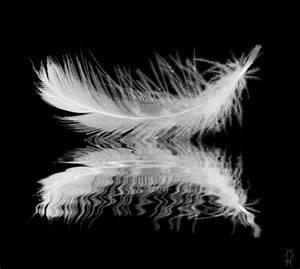black and white, feather, and gif by Ems | We Heart It