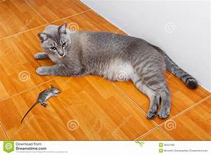 Cat kill rat stock image image of hair mice looking for Mice in between floors