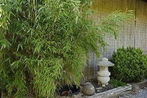 Bambus Im Garten : bambus pflanzen winterhart jetzt im angebot bambus und pflanzenshop ~ Markanthonyermac.com Haus und Dekorationen