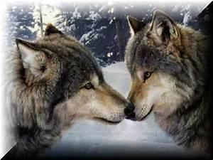 Wolf Kingdom