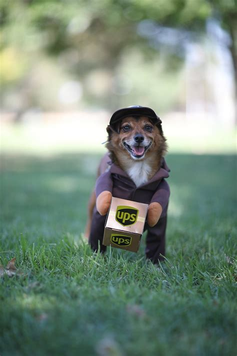 california costumes ups delivery driver dog costume