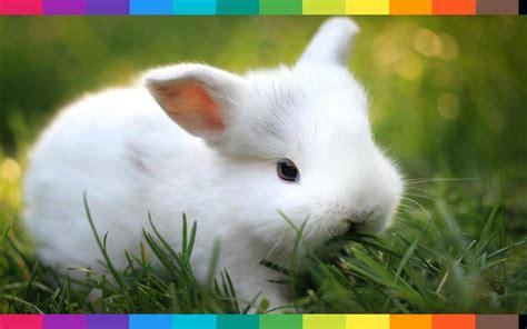 Cosa Mettere Nella Gabbia Coniglio by Sognare Conigli Appena Nati Oppure Un Coniglio Gigante