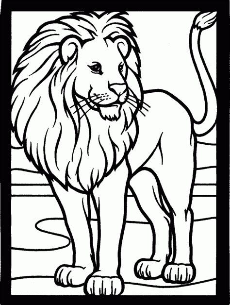 imagenes de leones  colorear colorear imagenes