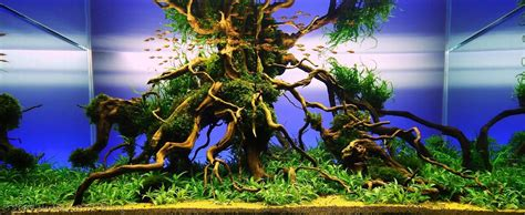 Aga Aquascaping Contest by Aga Aquascaping Contest Delivers Stunning Freshwater Views