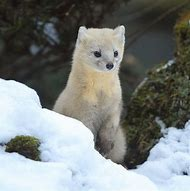 Japan Wild Animals