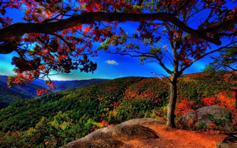 Hd Autumn Wallpaper (80+ Images Iphone 6s 16gb Used For Sale Uk 128gb Verizon M�u X�m Ebay 5s Specs Lazada With Facetime Of Plus