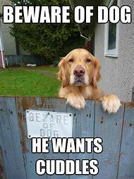 Beware of Dog Memes Funny