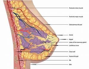 G9 Pectoral And Shoulder Regions