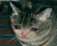 Cat Meme Sad Face Crying