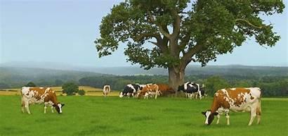 Dairy Farmers India Milk Train Trade Fair