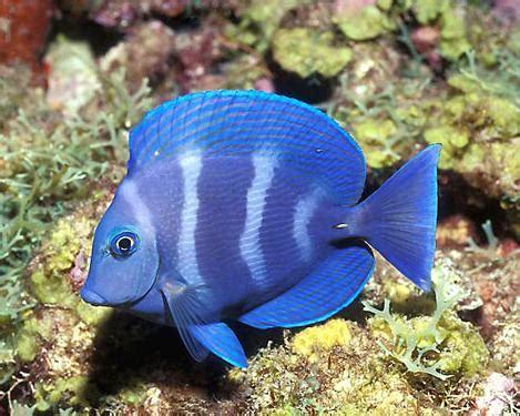 pet fish types salmans pets