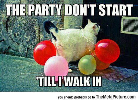 Funny Party Memes - party cat is here