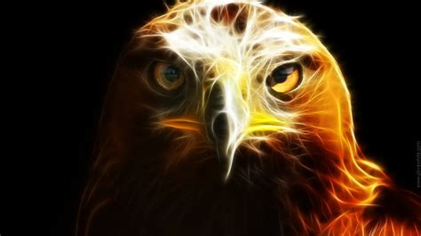Animated Eagle Wallpaper - images of rabbits wallpaper