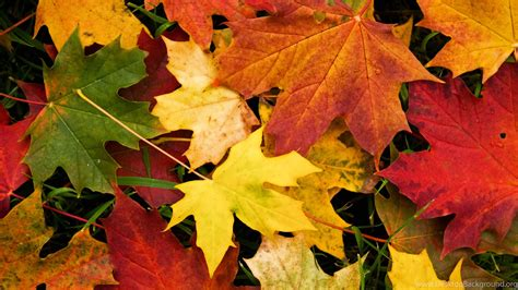 Desktop High Quality Fall Backgrounds by Autumn Leaves Wallpapers High Quality Desktop Background
