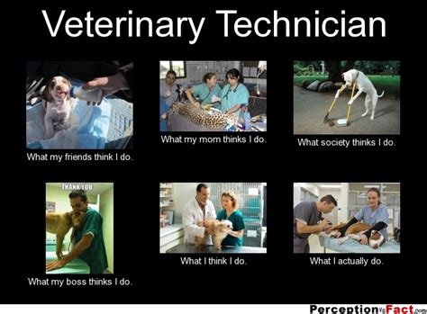 Vet Tech Memes - veterinary technician what people think i do what i really do perception vs fact