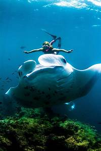 Adventurer Swims With Giant Manta Rays At Night