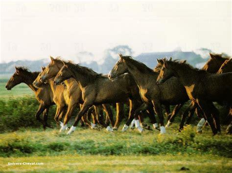 quel bureau de poste fond d 39 écran de cheval chevaux au galop