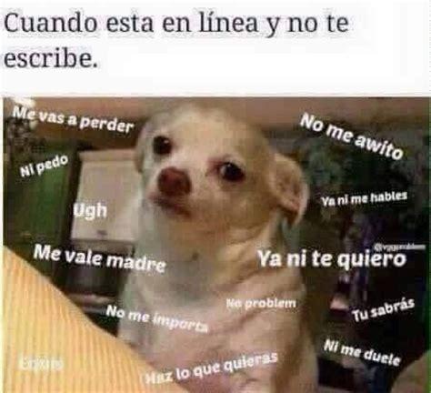 Meme Chihuahua - perro chihuahua meme s mega memeces