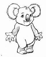 Koala Colorear Dibujos Koalas Coloring Coloriage Dessin Imprimer Animaux Dibujo Animal Coloriages Clipart Doki Colorier Kangourou Dessins Numero Kawaii sketch template