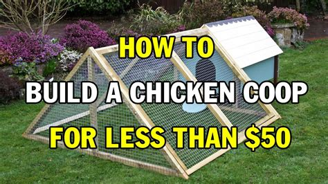 How To Build A Chicken Coop For Less Than $50  How To