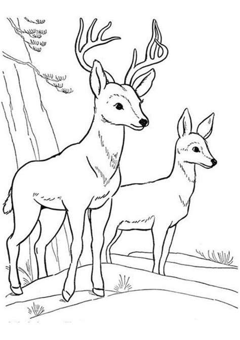 easy  print deer coloring pages tulamama