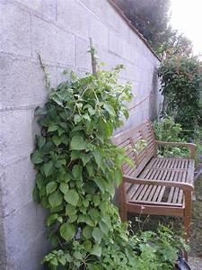 Comment Lessiver Un Mur : comment decorer un mur de jardin ~ Dailycaller-alerts.com Idées de Décoration