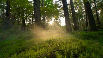 Living Nature Animated Smoke Forest Gifs Woods