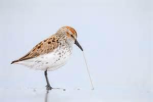 a taste test for birds audubon