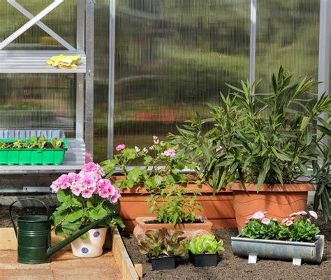 oleander im topf oleander im topf 187 so pflegen sie ihn richtig