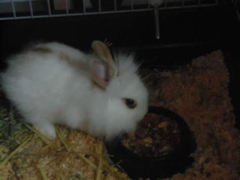 esperance de vie d un lapin ainsi que sa taille et son