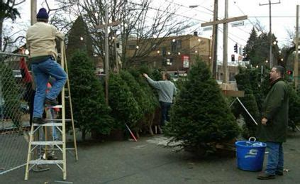 best seattle tree lot west seattle happening now holy rosary school tree lot day 1