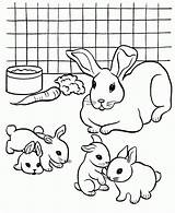 Coloring Rabbit Pages Pet Printable Colouring Rabbits Pets Breeding Bunny Print Dog Comments Popular Coloringhome Library Clipart Ocoloring sketch template