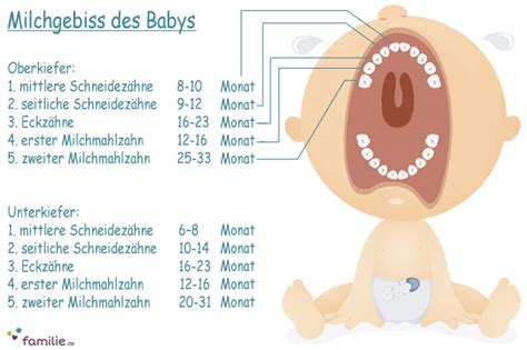 ab wann zahnen babys