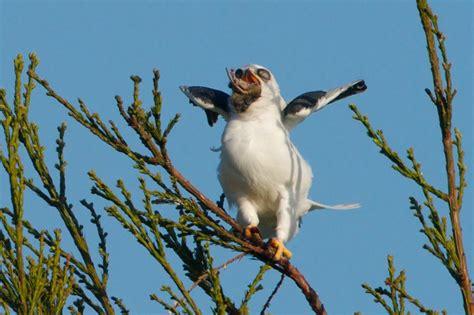 humboldt bays beautiful wildlife  birds