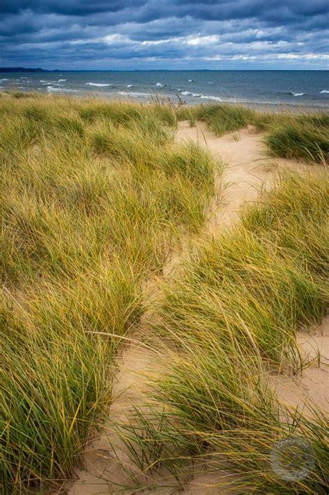 Lake Michigan Dune Grass