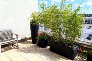 Ganzjahres Pflanzen by Bambus W Donicy Na Balkonie Lub Tarasie Bambusowy Sen