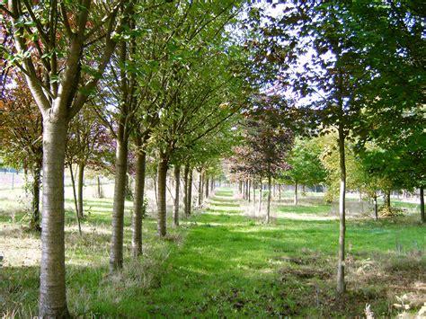 Baeume Im Garten Zierde Und Schattenspender by Baumschule Gro 223 E B 228 Ume Preise Pflanzen F 252 R Nassen Boden