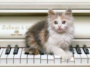 cat piano cat piano cats picture
