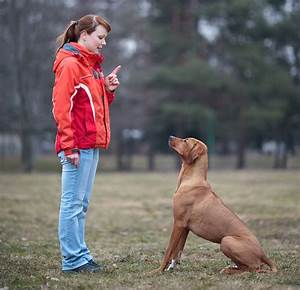 obedience training sit not bark With dog behaviorist
