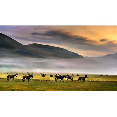 Horses at dawn Castelluccio Apennine Mountains Italy