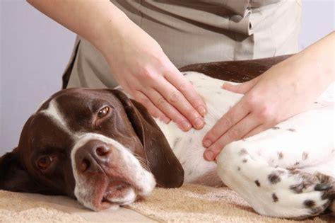 Benefits Of Animal Massage  Lakeview Animal Clinic