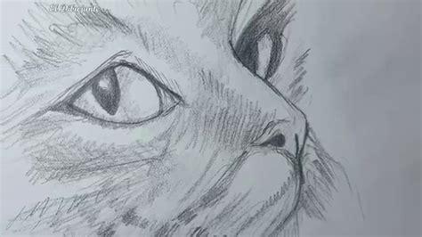Como dibujar un Gato paso a paso El Dibujante YouTube