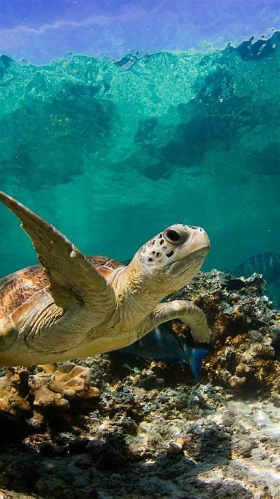 Turtle Sea Iphone Turtles Wallpapers Ocean Water